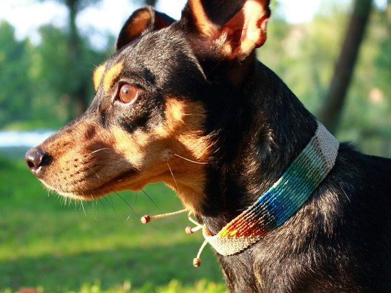 Mira este artículo en mi tienda de Etsy: https://www.etsy.com/es/listing/475827131/collar-macrame-hecho-a-mano-perro