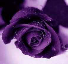A purple rose which symbolize enchantment, that he or she has fallen in love with the recipient at the very first sight...