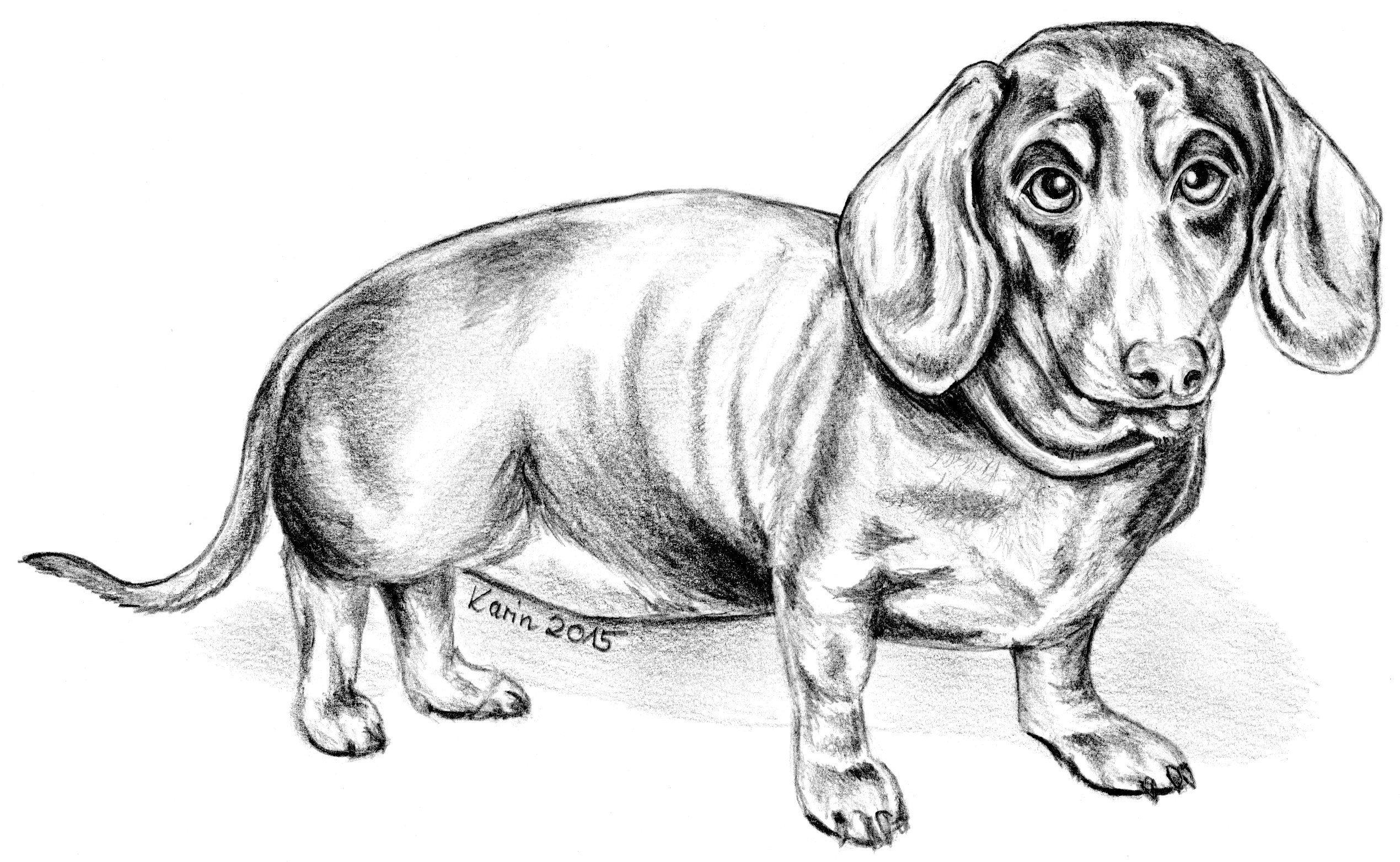 Hunde Ausmalbilder Dackel Aglhk