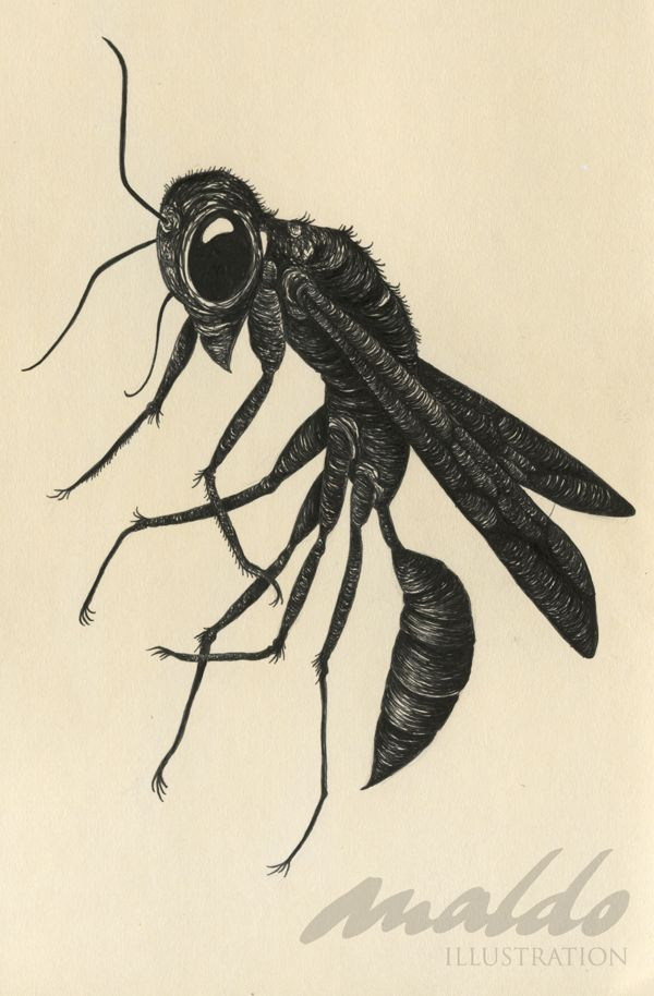 black wasp by maldo illustration via behance illustration project