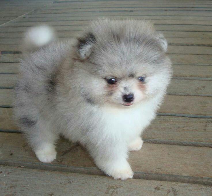 Te Cute vir woorde | Animals | Pinterest | Animal ...