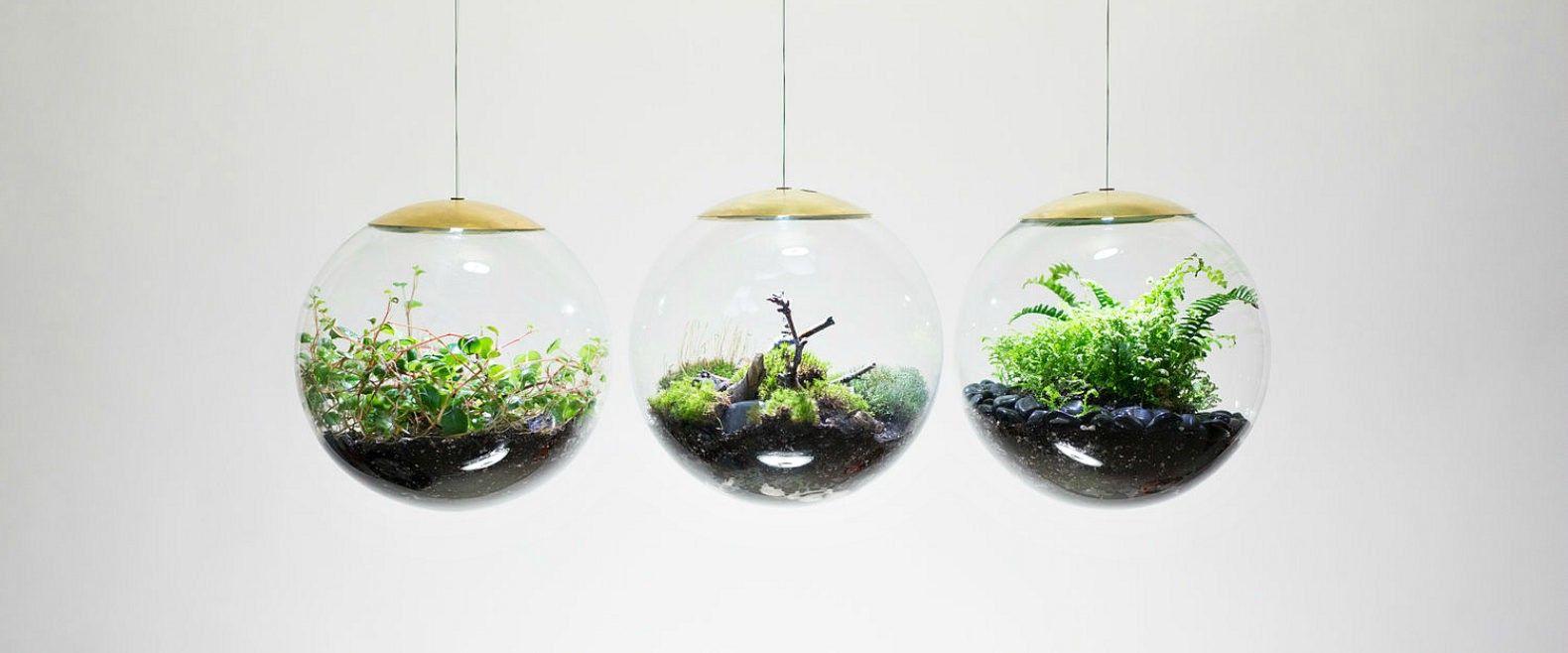 Photo of Queste straordinarie lampade da terrario coltivano piante anche nelle stanze più buie