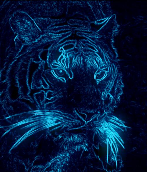 Neon Tiger Neon Wallpaper Glowing Art Star Art