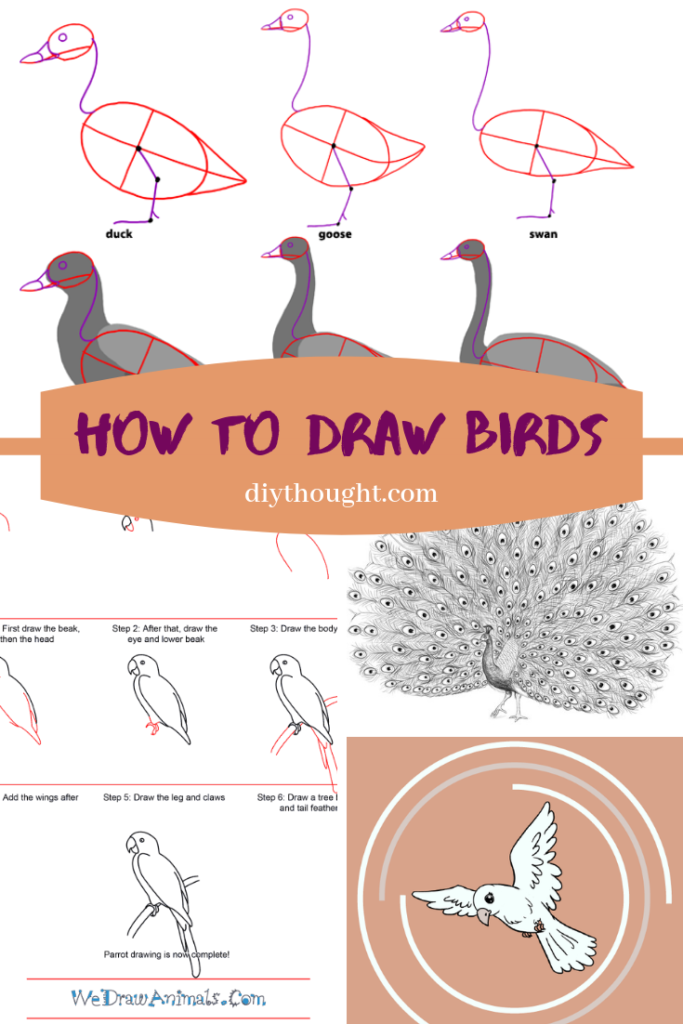 How To Draw Birds Diy Thought Bird Drawings Parrot Drawing Drawings