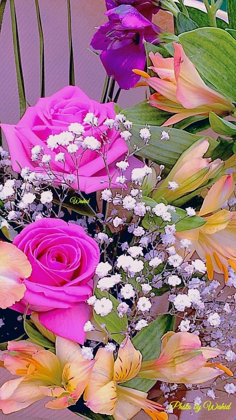 Beautiful Flowers Wahid Hassan Google