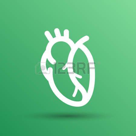 icono del coraz n humano rojo vector cardiovascular cardio  Foto de archivo