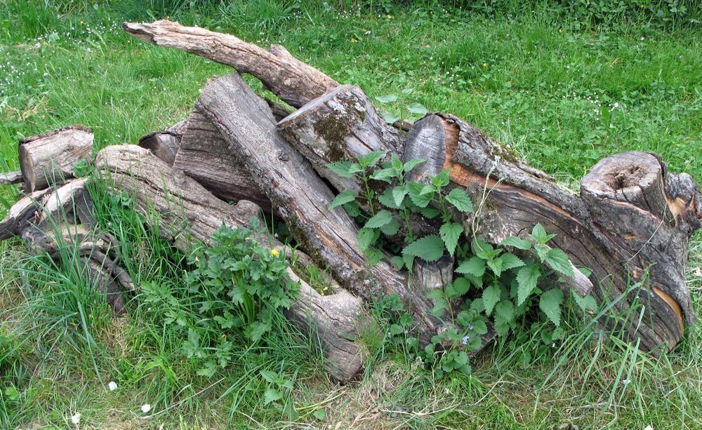 Viele Tiere Finden In Einem Sogenannten Totholzhaufen Wertvollen Lebensraum Naturgarten Vogel Im Garten Garten
