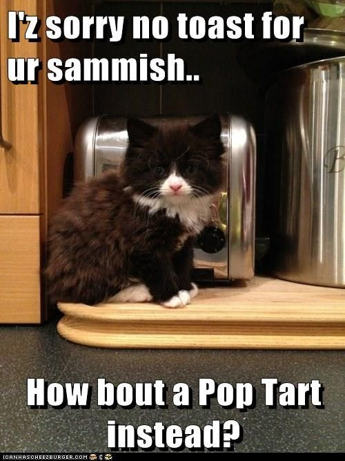 I Z Sorry No Toast For Ur Sammish How Bout A Pop Tart Instead Silly Cats Funny Cat Memes I Love Cats