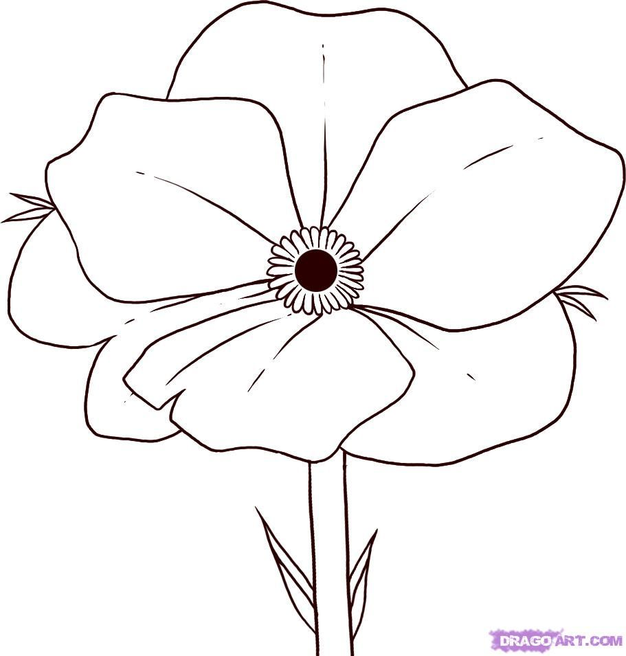 Red Flower Line Drawing : Easy to draw flowers how poppy step for