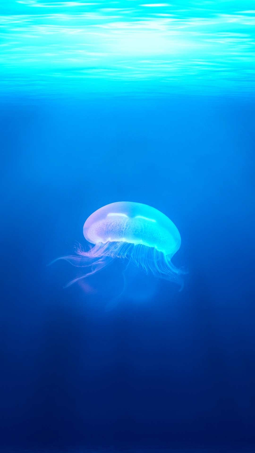 30 Blue Ocean Wallpaper Phone Backgrounds For Android Free Download With Images Jellyfish Illustration Underwater Wallpaper Ocean Wallpaper