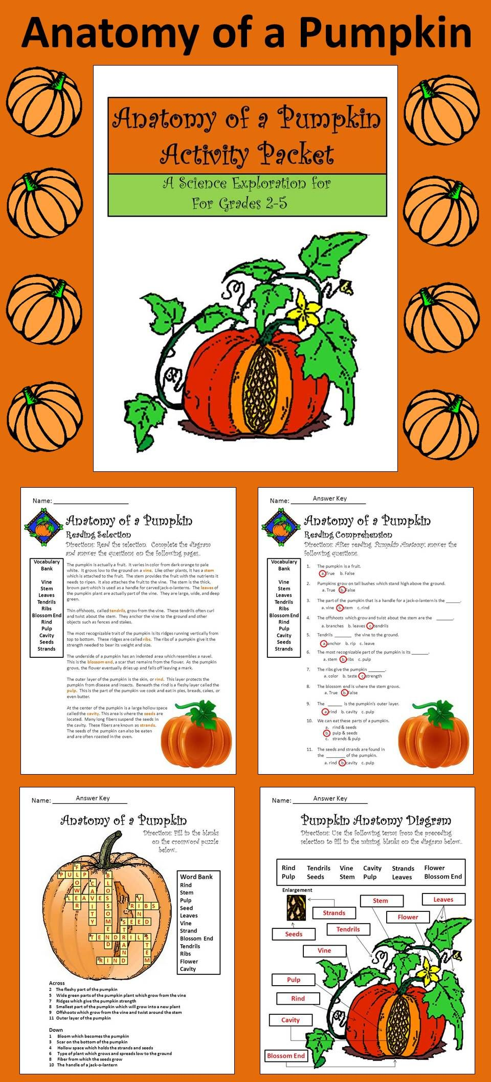 Pumpkin Anatomy Science Unit: An informative pumpkin activity booklet with  colorful pumpkin worksheets on pumpkin biology including reproducible  student ...