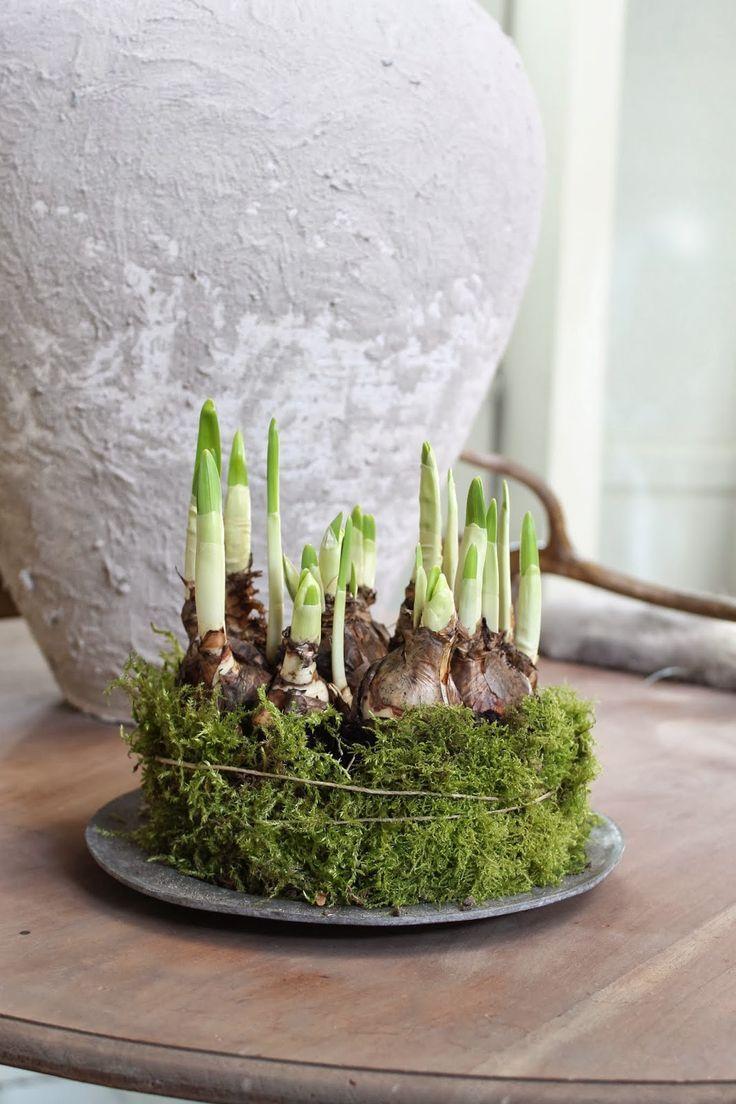 Gartenzelt Deko : Bildergebnis für lentestuk pflanzen pinterest