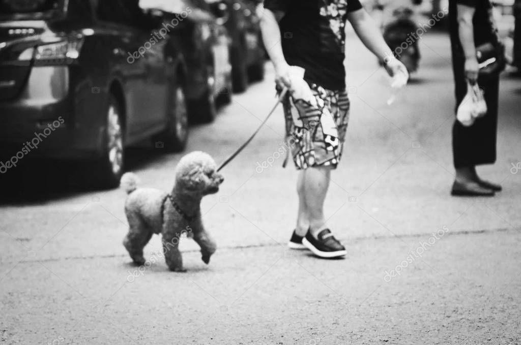 Shot Dog Sitting Street Stock Photo , SPONSORED,