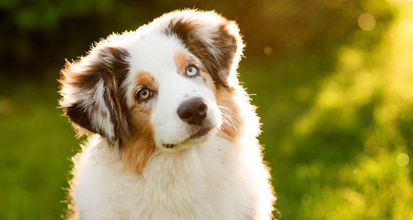 Photo of Why dogs eat grass — and how to prevent it