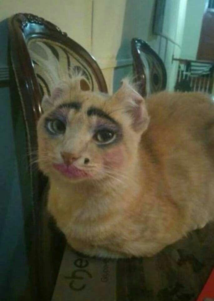 инжир кошку накрасили картинки последние новости
