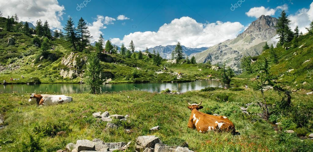 Mountain Lake Landscape Cows Lying Grass Beautiful Sunny Day Italian St Aff Cows Lying Landscape Mountain Lake Landscape Mountain Lake Mountains