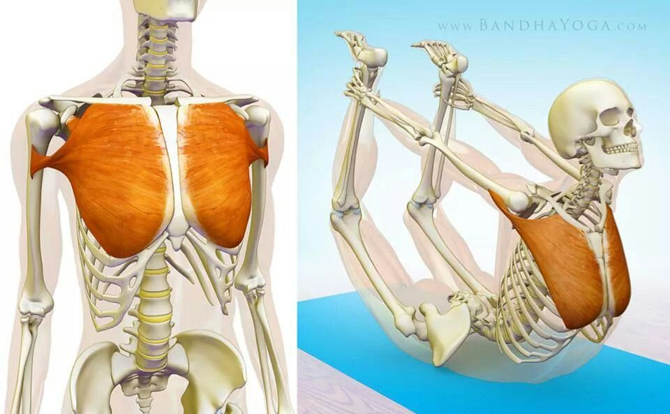 Pectoral mayor | Kinetic fisioterapia | Pinterest | Fisioterapia ...