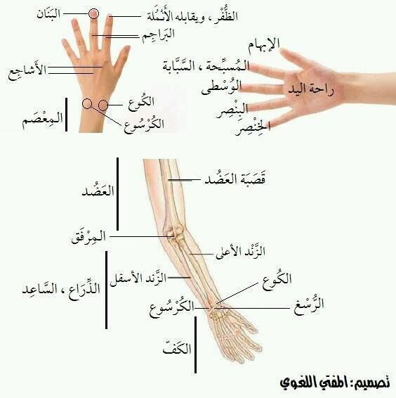 Pin By Moh On Arabic Worksheets Learning Arabic Learn Arabic Language Arabic Langauge