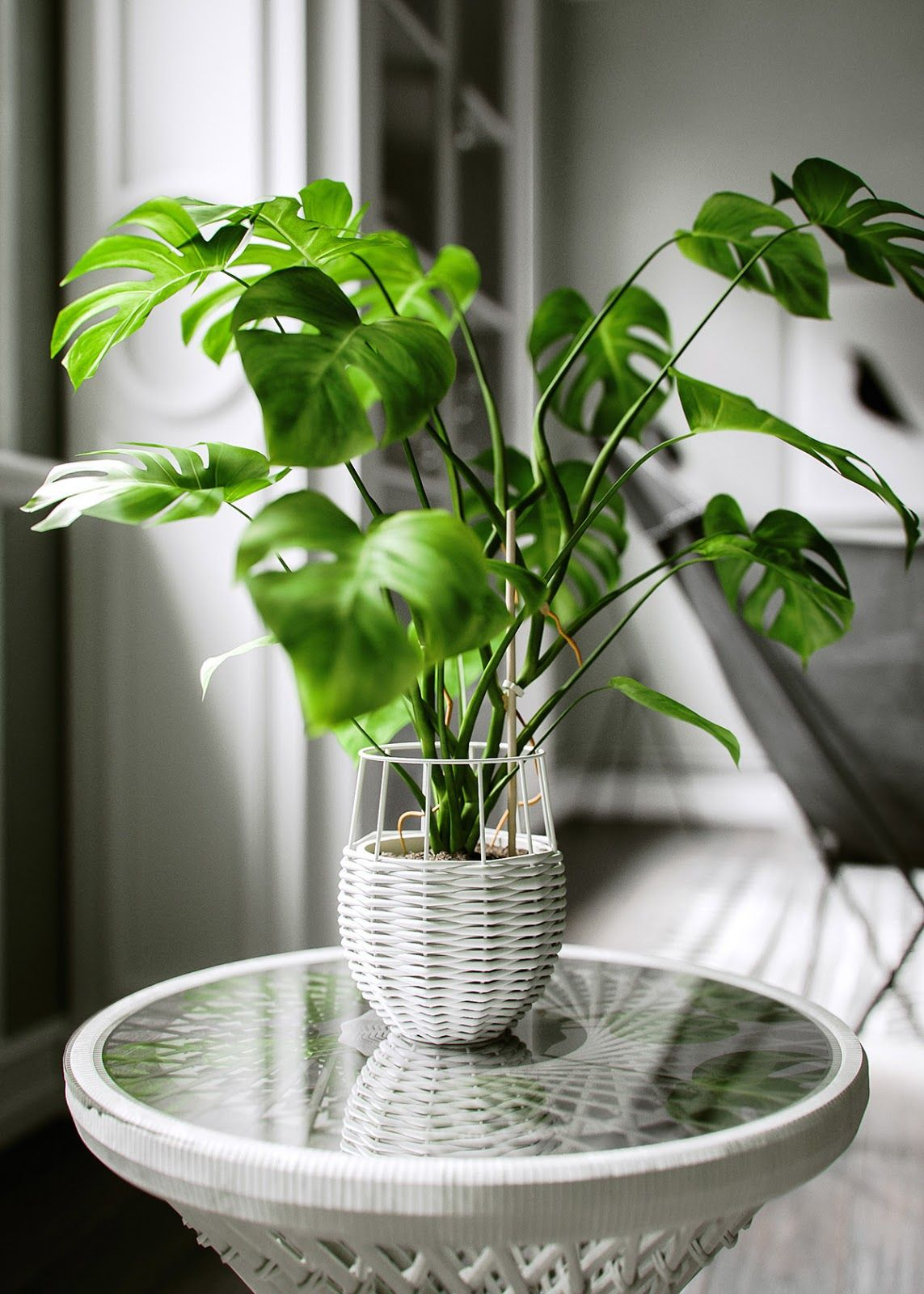 All of these indoor plants are easy to keep alive and perfect for small spaces