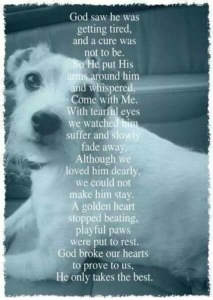 Pin By Southern Summer Grl On All Animals Go To Heaven