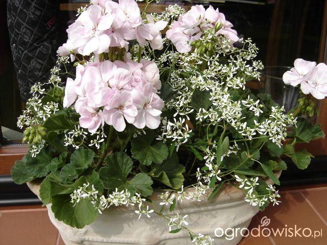 Letnie Skrzynki Balkonowe I Donice Strona 7 Forum Ogrodnicze Ogrodowisko Container Flowers Floral Wreath Flowers