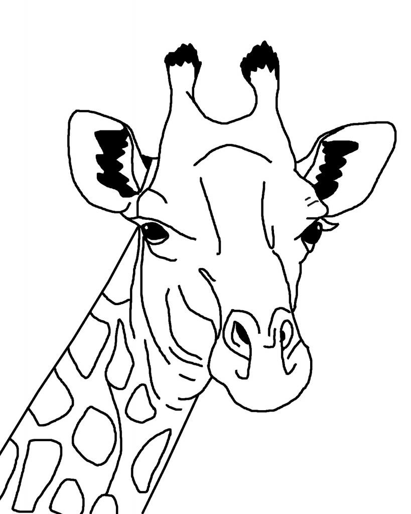 Giraffe Coloring Page Cartoon Outline Drawing Just Free Image