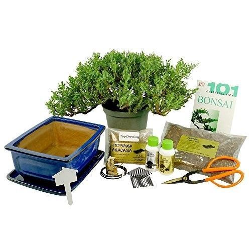Dallas Bonsai Gardens Premium Bonsai  Kit Informal Upright Tool 101 Tips Gift New