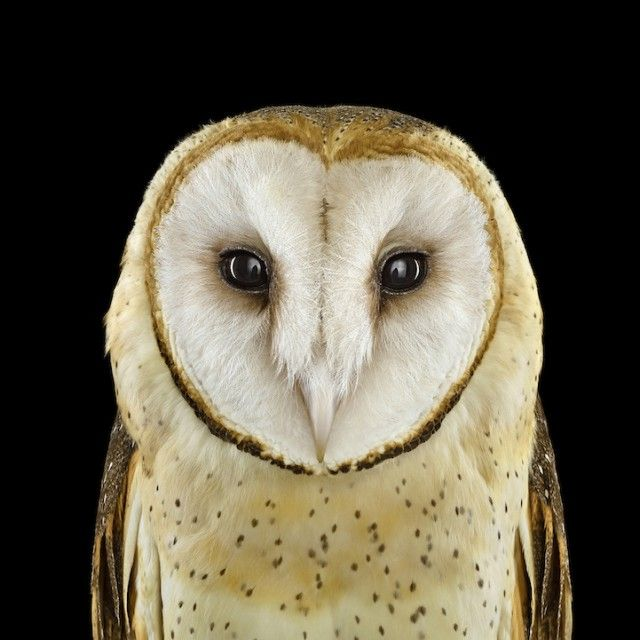 Stunning Close-Up Portraits of Owls by Brad Wilson