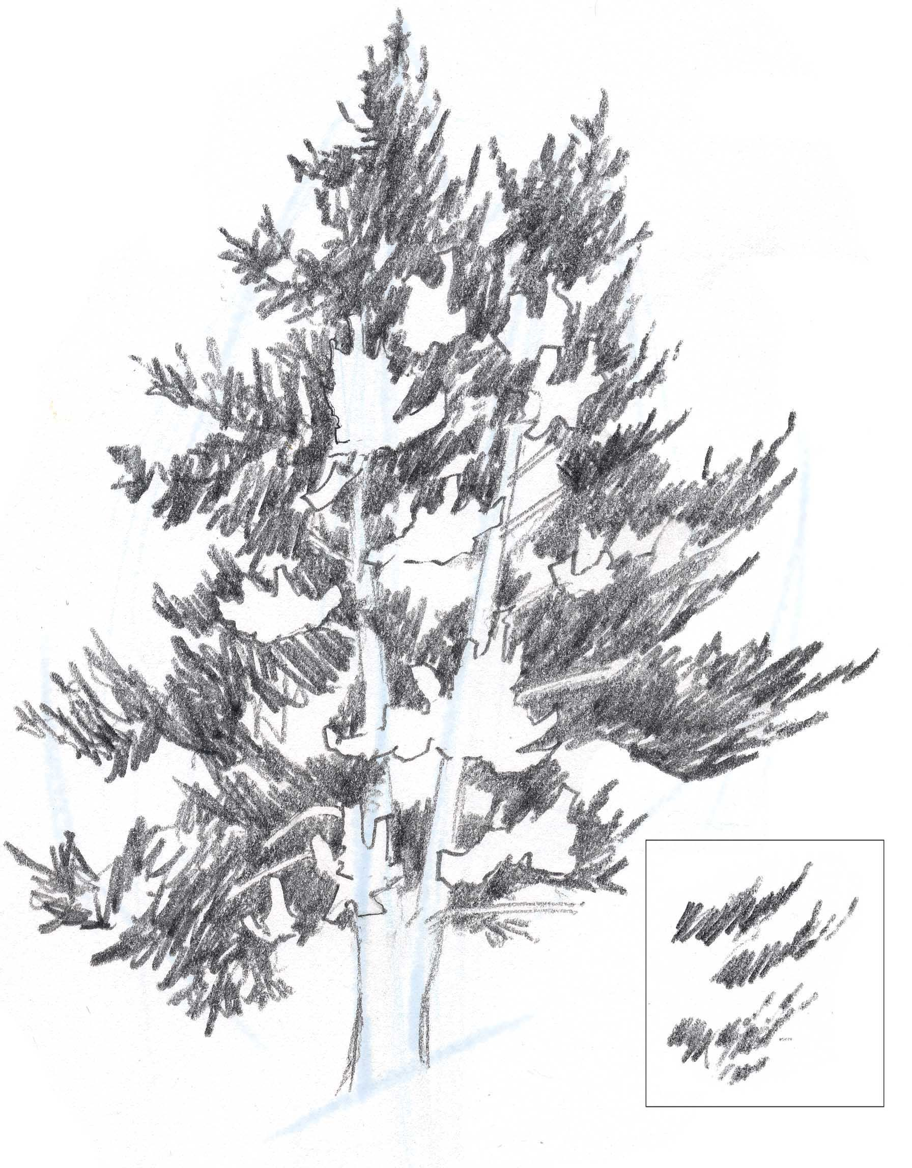 Find This Pin And More On How To Draw Realistic Trees, Plants Bushes And  Rocks