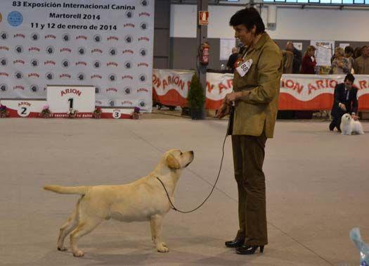 Marshal Con 6 Meses Bis Cachorros Internacional Martorell 2014