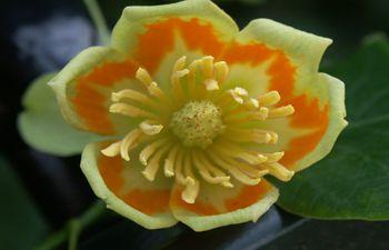 Foto`s van Unieke bloemen - Google zoeken