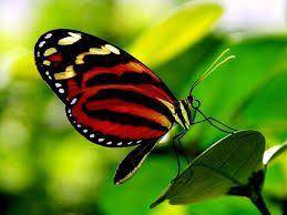 Картинки по запросу бабочки живые