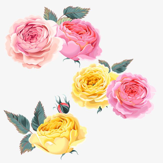 Rose Pink Roses Yellow Rose Roses Clipart Rose Pink Roses Png Transparent Clipart Image And Psd File For Free Download Yellow Roses Rose Pink Roses