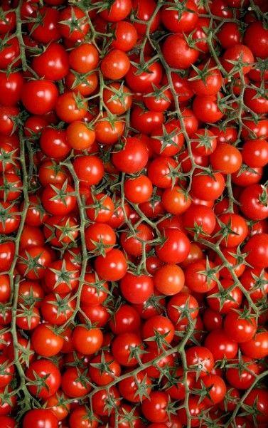 Delicia de tomates! Mil receitas na cabeça