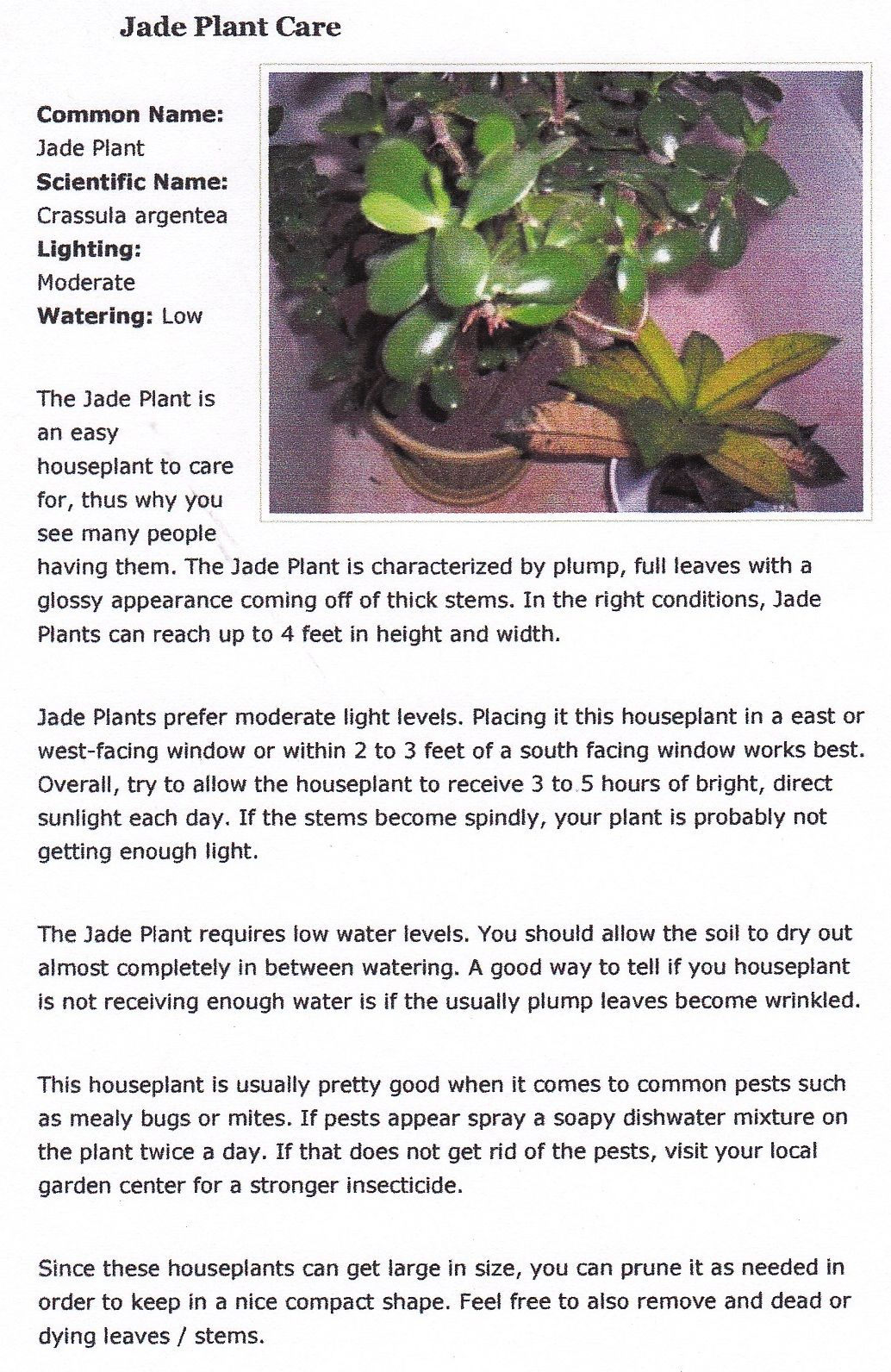 Jade Plant Care Jade Plant Care Plant Care Plants