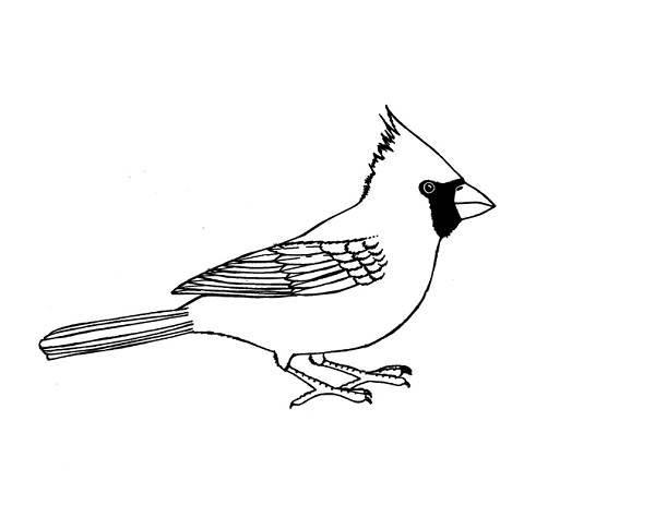 Cardinal Bird Image Coloring Page : Coloring Sun (Dengan ...