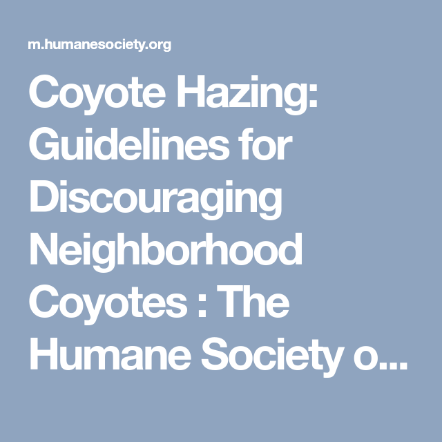 Coyote Hazing Guidelines For Discouraging Neighborhood Coyotes The Humane Society Of The United States Coyote The Neighbourhood Guidelines