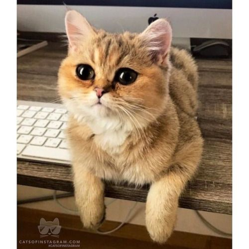 Image result for anime cats funny