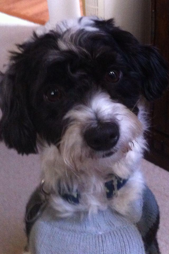 Pin by Maryam Duffey on My Dogs Dogs, Animals