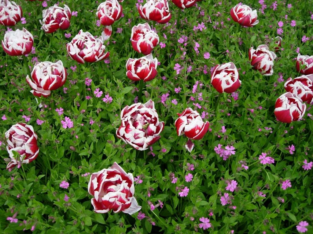 Wild Flower Screensavers Free Cheap Flowers By Post Flowers Of All