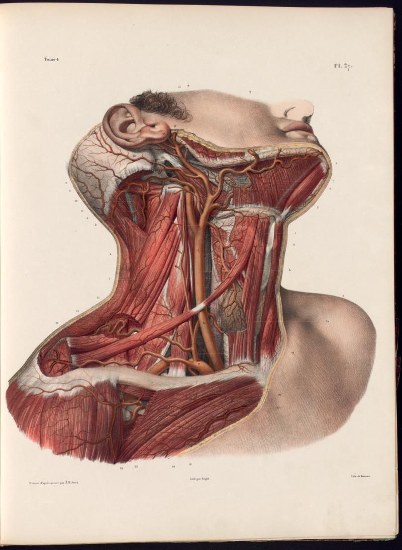 Anatomia Collection Uoft Libraries Plate Description Medicin