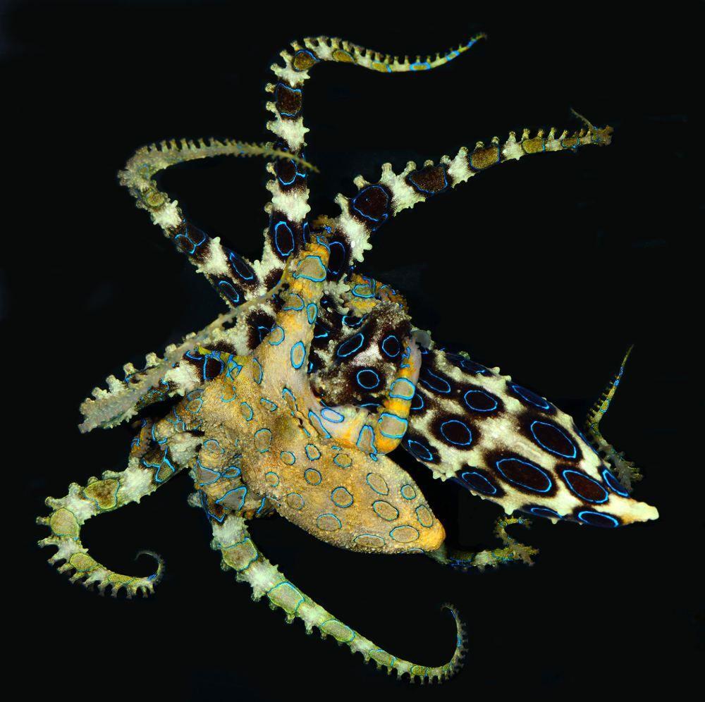 Pharyngula - Evolution, development, and random biological