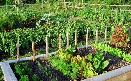 C mo hacer un huerto en el jard n huerto c mo hacer y for Hacer un huerto en el jardin