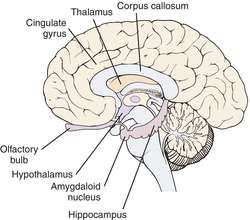 limbic system beautiful brains limbic system medical