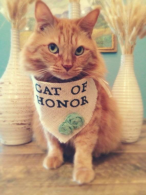 Cat Accessories Bandana Cat Of Honor Wedding Collar Girl Flowers - Guy gets professional photoshoot with his cat engagement photos