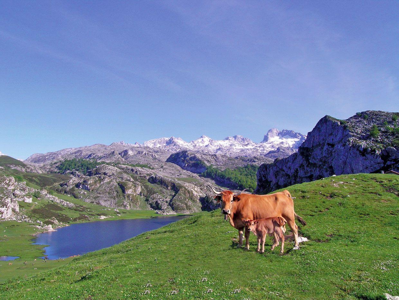 Diez Lagos Muy Espectaculares Del Mundo Lagos De Covadonga Picos De Europa Parques Nacionales