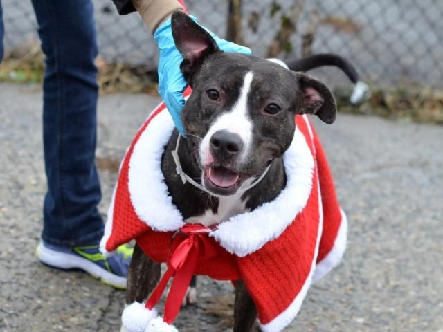 Animal Humane Society Staten Island