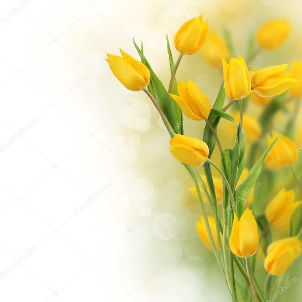 Download Tulip Flowers Design Border Stock Image Tulips Flowers Flower Designs Tulips