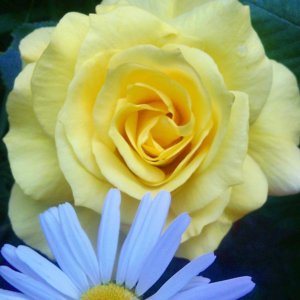 http://www.artifleurs-fleurs-artificielles.com/boutique/photos-sur-toile/…
