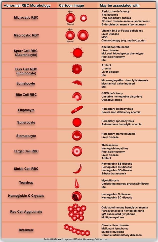 abnormal erythrocytes